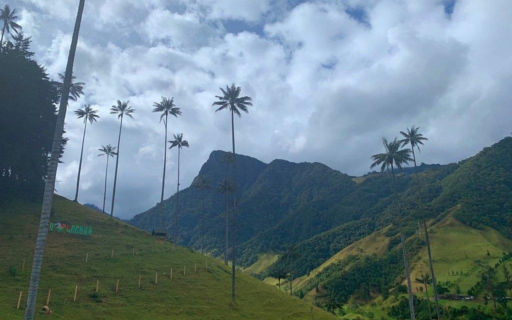 Arboles de plama en el valle del cocora